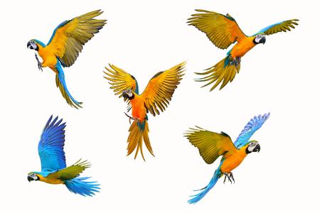 Set di pappagallo ara isolati su sfondo bianco