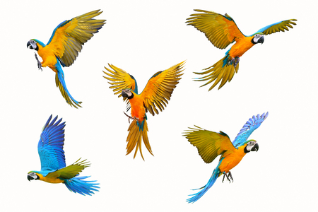 Set of macaw parrot isolated on white background Banco de Imagens