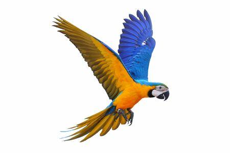 Ara Papagei isoliert auf weißem Hintergrund.