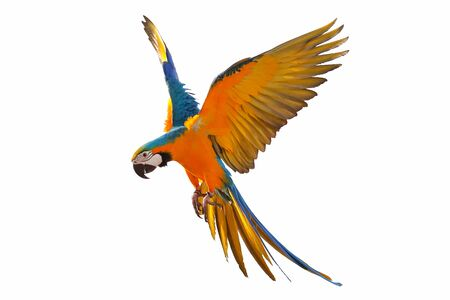 Colorful macaw parrot isolated on white Banque d'images