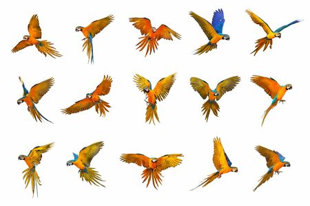 Set of macaw parrot isolated on white background Banque d'images