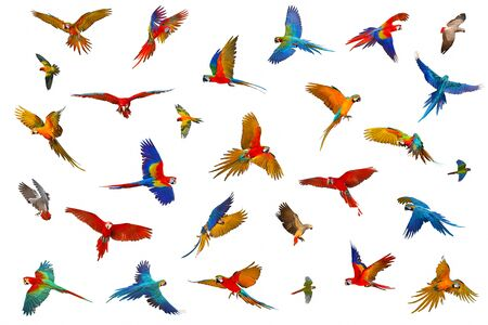 Colorful parrots isolated on white background. Banque d'images