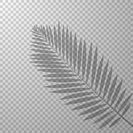 shadow effect palm leaf transparent background vector illustration