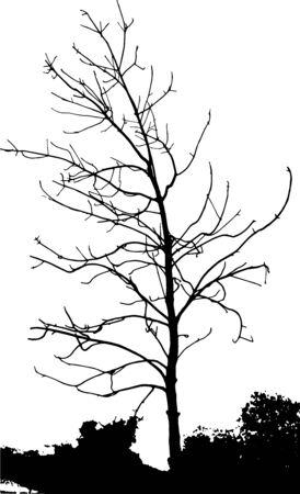 Sagome di alberi su sfondo sottile. Modello ad albero. Illustrazione vettoriale