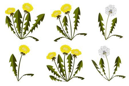 Set of dandelions on white background. Flat Design. Vector Illustration Illustration