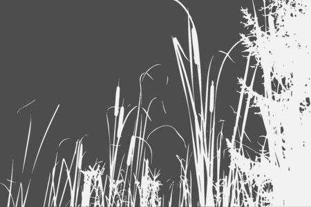 Silhouette of Reed Bush. Vector Illustration 矢量图像