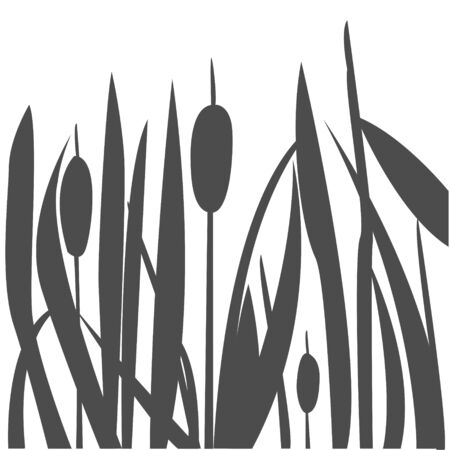 Silhouette of Reed Bush. Vector Illustration Illusztráció