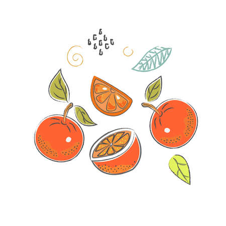 Cute Icon with oranges. Hand Drawn Scandinavian Style. Vector Illustration