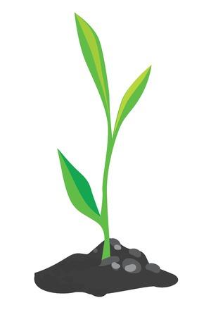지상의 소수의 성장 녹색 새싹, 일러스트