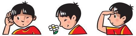 sense of sight: Three senses  Children vector illustration of boy Illustration