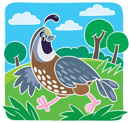 Children vector illustration of little funny quail on the field