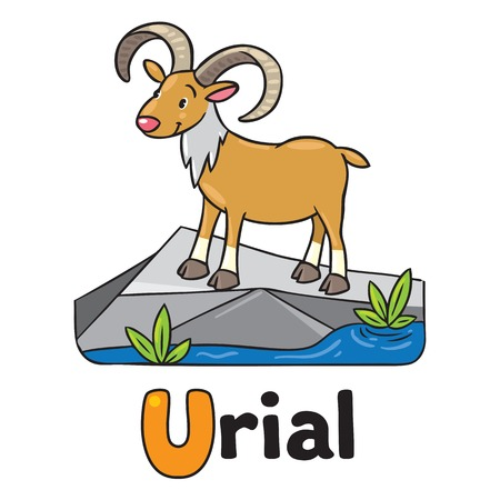 bighorn: Little funny urial or ram, for ABC. Alphabet U