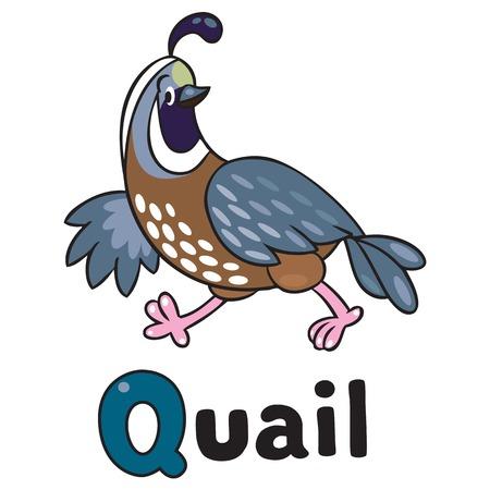Kinderen vector illustratie van kleine grappige kwartel lopen op het veld. Alfabet Q Stock Illustratie