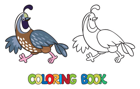 Coloring book or coloring picture of little funny quail