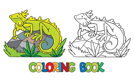iguana: Coloring book or coloring picture of little funny iguana on rock