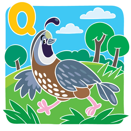 fascinated: Children vector illustration of little funny quail on the field. Alphabet Q Illustration