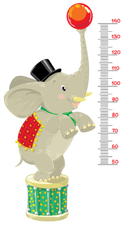 stovepipe hat: Meter wall or height meter of funny elephant in top hat, checkered blanket and scarf with ball and drum in a circus stance. Children vector illustration with a scale to measure growth. Height chart Illustration