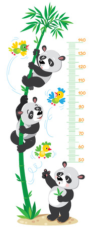 Meter wall or height chart with big high bamboo tree, funny pandas and small bright birds. Children vector illustration.