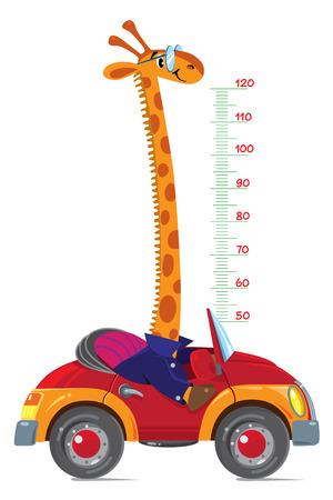 tallness: Giraffe on car. Meter wall or height chart