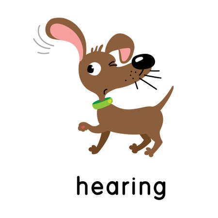 A dog is hearing. One of five senses. Hearing