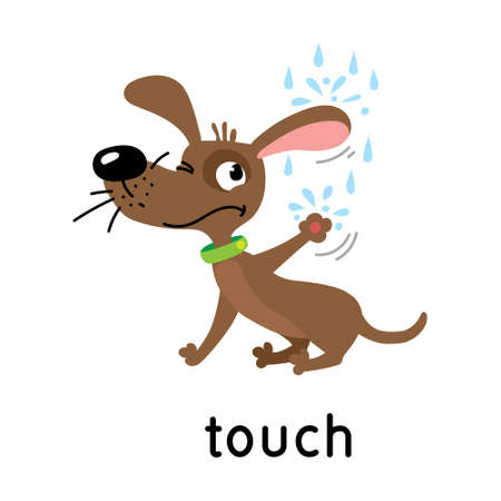 Dog and raindrops. Five senses. Touch Ilustrace