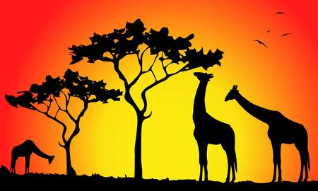 giraffe silhouette at sunset in the savannah Illustration