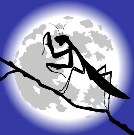 secluded: silhouette of praying mantis Illustration