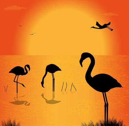 flamingi: sylwetka flamingów na jeziorze w zachodzie słońca Ilustracja