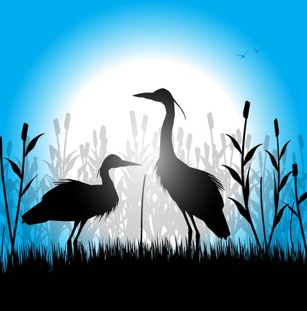 silhouette of herons in the marsh