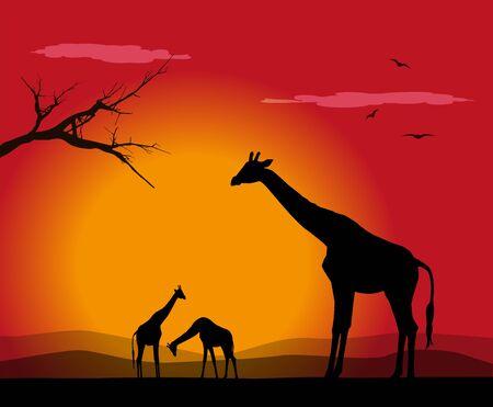 vector illustration of group of giraffes at sunset Ilustrace
