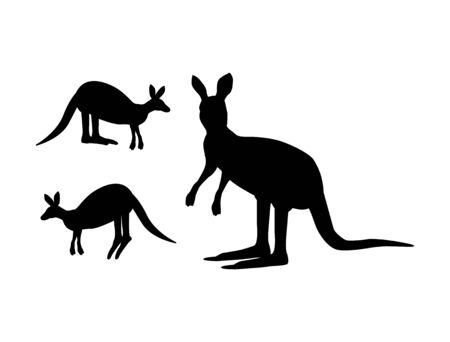 Vector illustration of kangaroo on a white background.