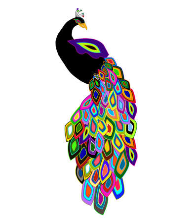 vector illustration of black peacock with colorful feathers