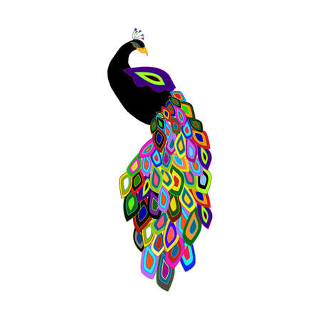 vector illustration of peacock with colorful feathers Illustration