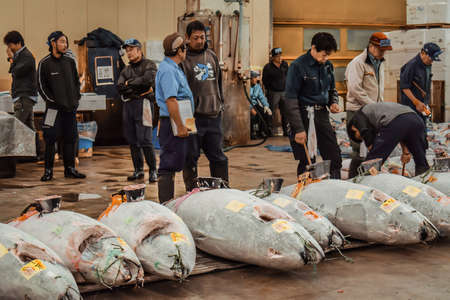 Morning auction of luxurious large frozen tuna fish at the Tsukiji market in Tokyo Japan Editorial