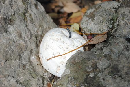 petrified: white apple petrified Stock Photo