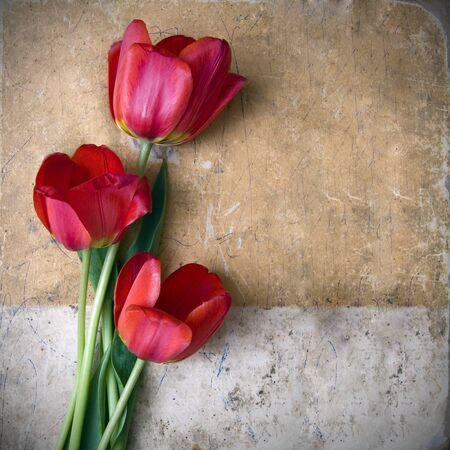 vintage flower background photo