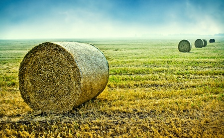 hay bales harvested in the field photo