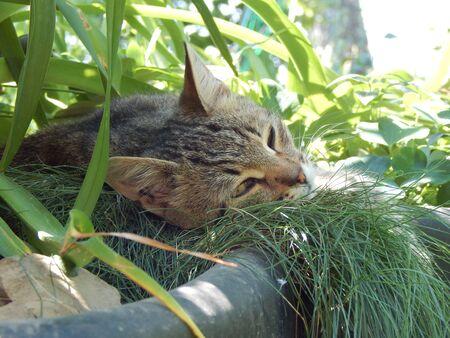 Cat's holiday Foto de archivo - 133571401