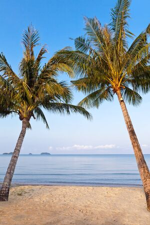 trad: Coconut Tree on the beach at koh Chang Island, Thailand Stock Photo