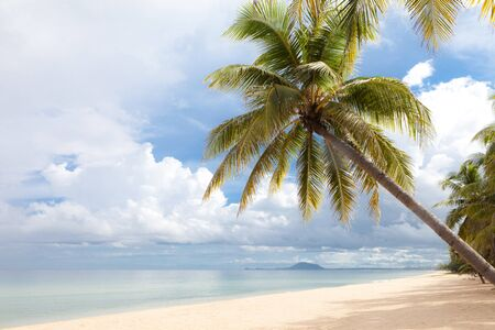 trad: Coconut Tree on the Beach, Thailand