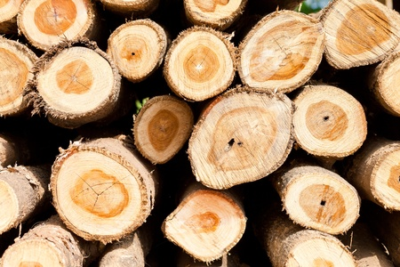 Background of dry chopped firewood logs stacked up on top of each other in a pile photo