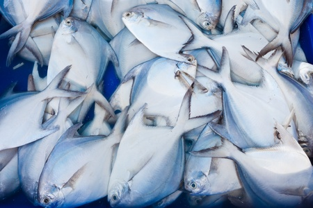 squama: Fresh fish at the market Stock Photo
