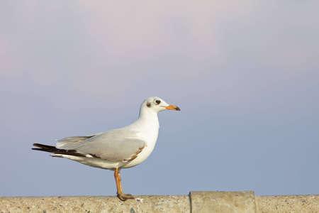 sunk: A sea gull
