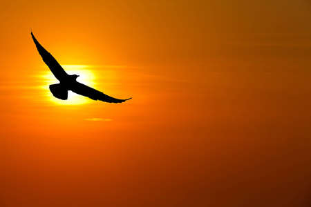 Seagull hover between sunset photo