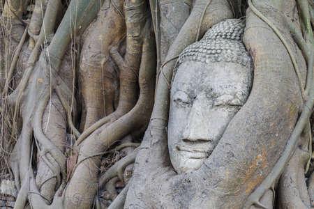 Head of buddha statue, Ayutthaya,Thailand photo