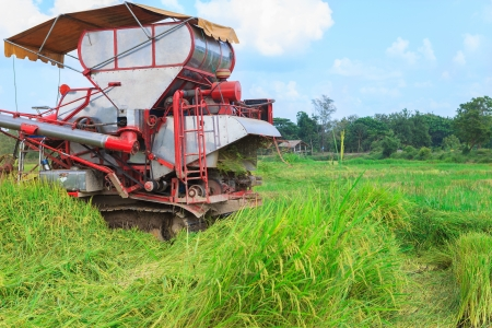 Harvester tractor working a rice field Stock Photo - 13654066