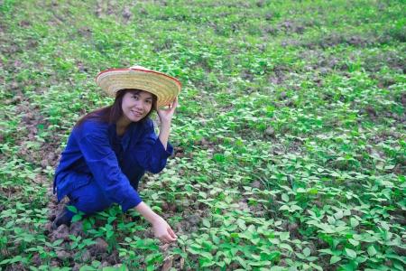 allepey: Asian women working in peanut field