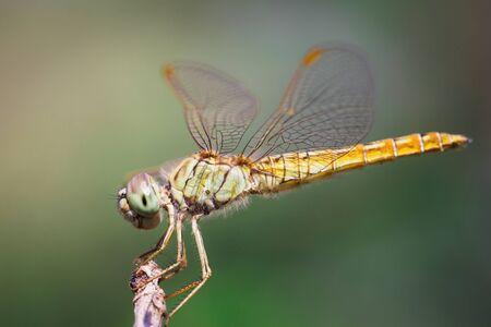 Closeup dragonfly photo
