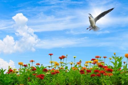 Fleurs colorées sur le ciel bleu avec mouette volant dans le ciel