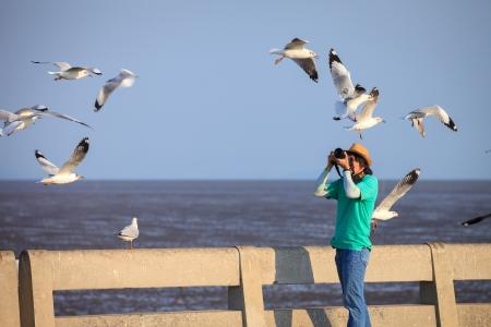 gaviota: El fotógrafo toma fotos de gaviotas
